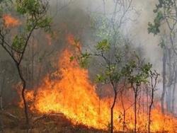 ادامه سریال آتش سوزی های منطقه دشتگل / جنگل هایی که آتش امانشان نمی دهد…!