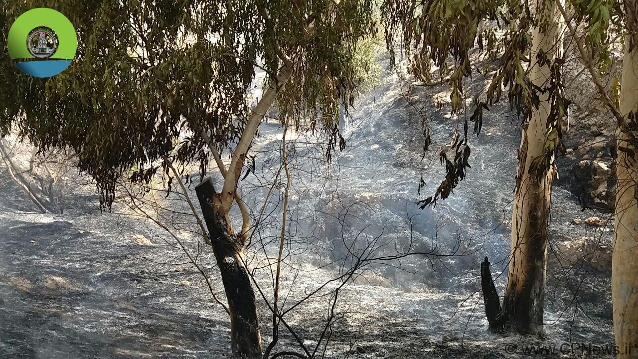 سریال آتش سوزی های مراتع و جنگل های مسجدسلیمان به تُل بزان رسید … + تصاویر