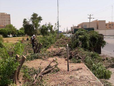 برکناری مسئول فضای سبز شهرداری منطقه هشت اهواز