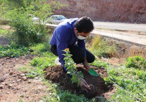 اولین یادبود درختی در شهر اولین ها بیاد محسن خیرالهی