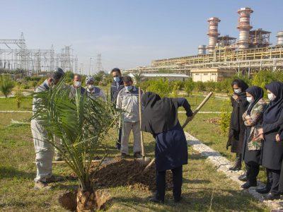 کاشت ۱۴ نخل خرما در پتروشیمی فجر بندر ماهشهر