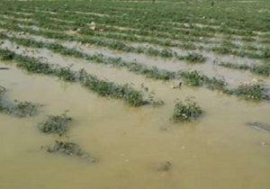 پرداخت ۹۱۰ میلیارد ریال خسارت به فعالان بخش کشاورزی در خوزستان