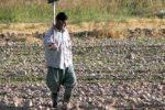 دستور دیمی شدن کشت در خوزستان باوجود تخصیص۱۶۷میلیاردی بودجه طرح برکت