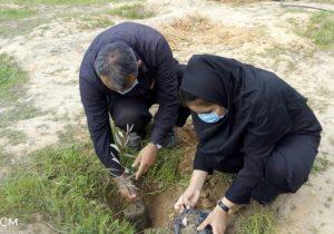 به مناسبت هفته درختکاری؛ فواید درختان در زندگی