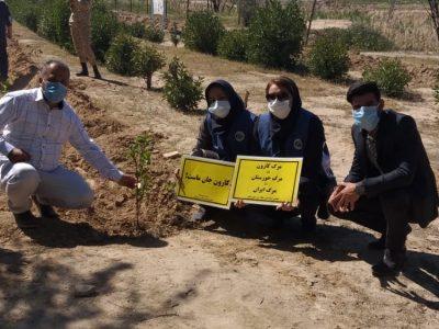 کاشت درختان مثمر در حمیدیه با مشارکت تشکل های محیط زیستی خوزستان