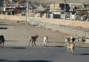 جولان سگ های بلاصاحب در شهر زنگ خطری برای سلامت شهروندان مسجدسلیمان