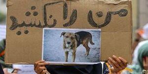 اعتراض به فراخوان شهرداری شوشتر برای اتلاف سگ های بلاصاحب