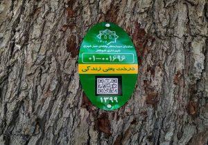 مرحله دوم پلاک کوبی و شناسنامه دار کردن درختان شوشتر آغاز شد
