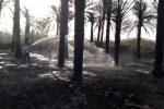 آتش زدن بقایای محصولات کشاورزی حادثه ساز شد
