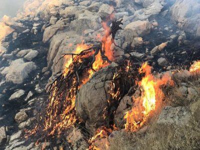 وجود بیش از ۶۰ کانون حریق در جنگلهای خوزستان