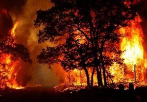 پشت پرده آتش سوزی در جنگل های ایران