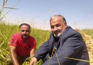 کاشت نهال در جنت مکان همزمان با روز آتش نشانان